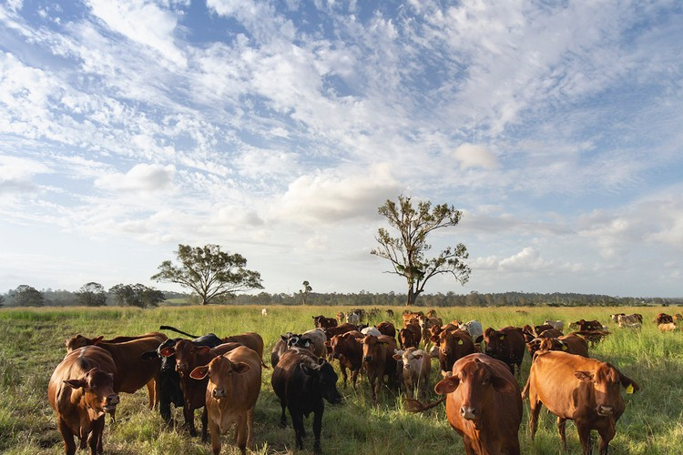 Forage Farms at Kybong in the beautiful Mary Valley, Queensland